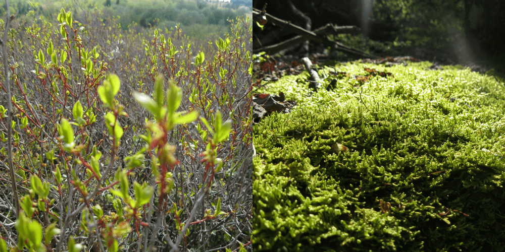 Dolly Sods Wilderness Blueberries and Moss