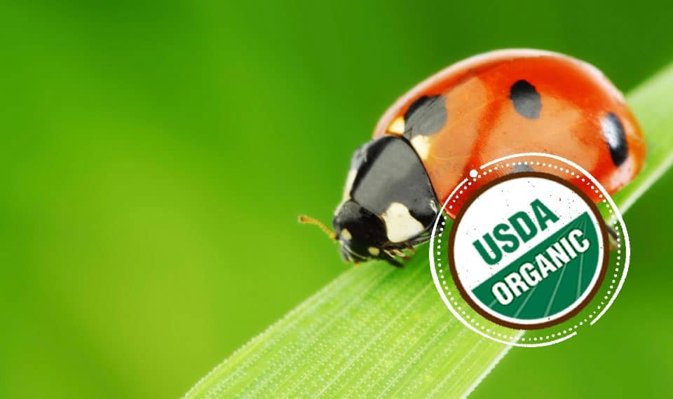 Ladybugs in Organic Farming
